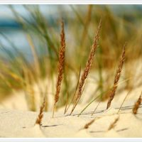 végétation dune truc vert cap ferret